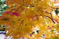 masyuen_autumn_2_0074