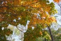 masyuen_autumn_2_0075