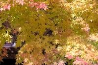 masyuen_autumn_2_0078