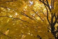 masyuen_autumn_2_0079