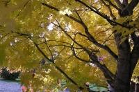 masyuen_autumn_2_0080