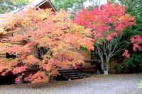 masyuen_autumn_3_0002