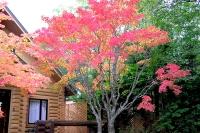 masyuen_autumn_3_0004