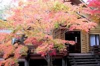 masyuen_autumn_3_0005