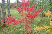 masyuen_autumn_3_0006