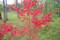 masyuen_autumn_3_0007