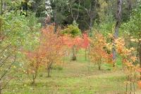 masyuen_autumn_3_0008