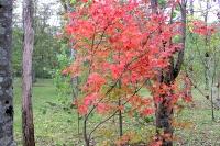 masyuen_autumn_3_0010