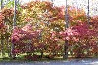 masyuen_autumn_3_0012