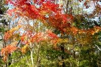 masyuen_autumn_3_0013