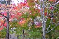 masyuen_autumn_3_0014