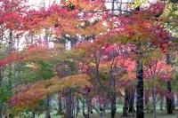 masyuen_autumn_3_0015