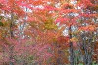 masyuen_autumn_3_0016