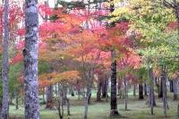 masyuen_autumn_3_0017