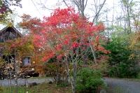 masyuen_autumn_3_0018