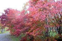 masyuen_autumn_3_0020