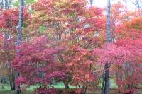 masyuen_autumn_3_0021