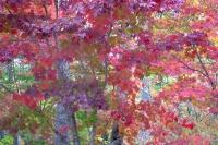 masyuen_autumn_3_0022
