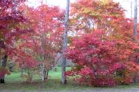 masyuen_autumn_3_0023