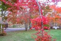 masyuen_autumn_3_0027