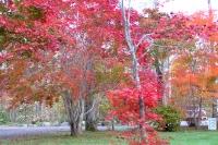 masyuen_autumn_3_0028