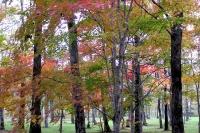 masyuen_autumn_3_0029