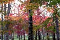 masyuen_autumn_3_0030