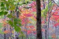 masyuen_autumn_3_0032