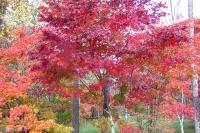 masyuen_autumn_3_0035