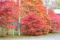 masyuen_autumn_3_0036