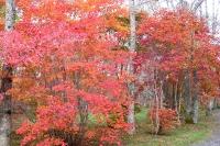 masyuen_autumn_3_0038