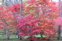 masyuen_autumn_3_0039