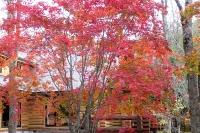 masyuen_autumn_3_0042