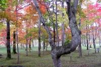 masyuen_autumn_3_0043
