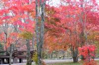 masyuen_autumn_3_0044