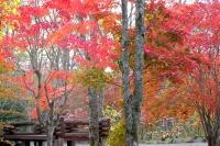 masyuen_autumn_3_0046