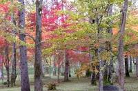 masyuen_autumn_3_0047