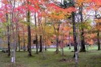 masyuen_autumn_3_0048
