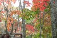 masyuen_autumn_3_0050