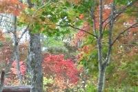 masyuen_autumn_3_0051