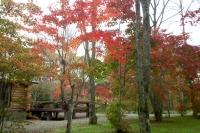 masyuen_autumn_3_0053