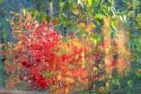 masyuen_autumn_3_0056