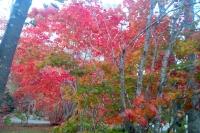 masyuen_autumn_3_0058