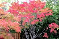 masyuen_autumn_3_0059