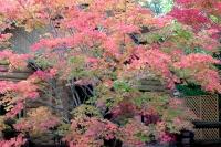 masyuen_autumn_3_0060