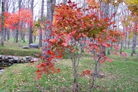 masyuen_autumn_6_0403