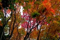 masyuen_autumn_6_0406