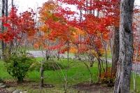 masyuen_autumn_6_0407