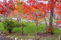 masyuen_autumn_6_0408