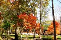 masyuen_autumn_6_0412